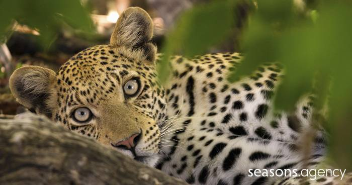 Eine Reise zu den Leoparden – Wir gehen auf Safari