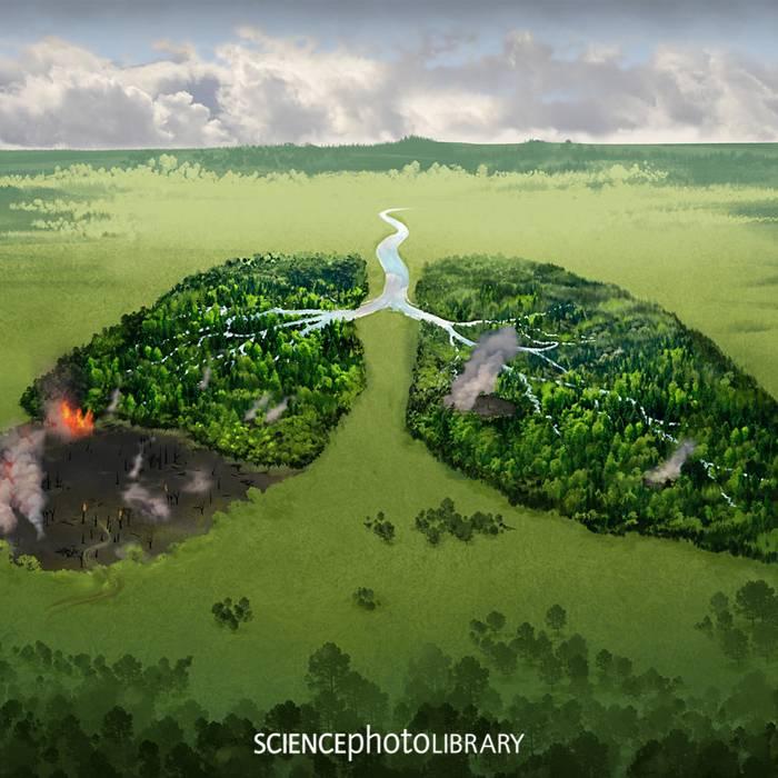Wie Illustrationen die Welt erklären