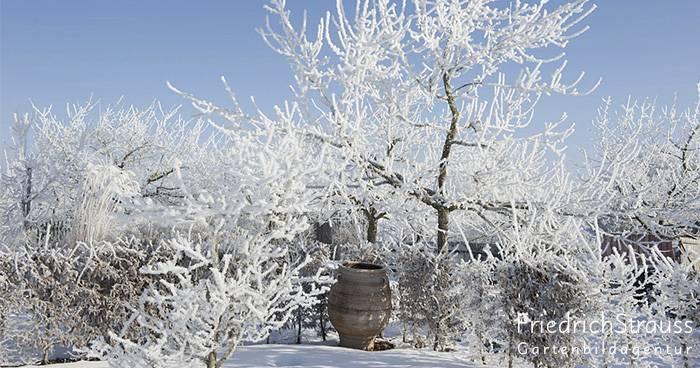 Wie gestalte ich einen attraktiven Winter-Garten?