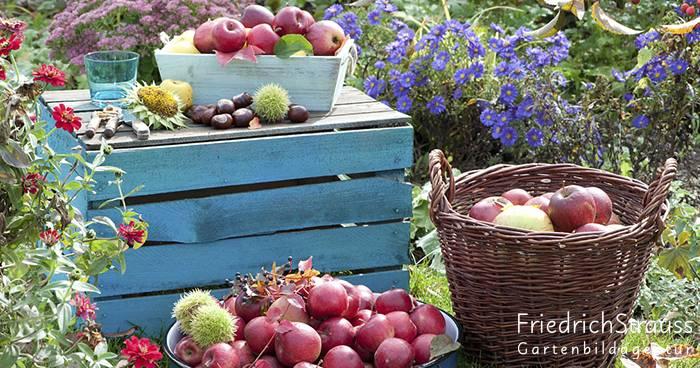 Süß und knackig: Auf zur Apfelernte!